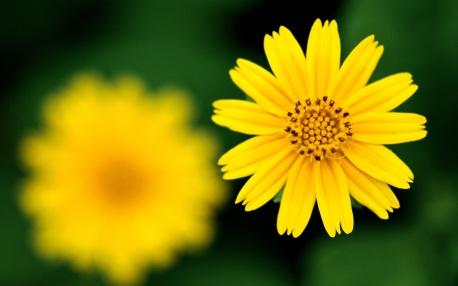 flor em foco